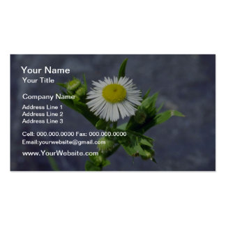 Yellow Annual Fleabane (Erigeron Annuus) flowers Double-Sided Standard Business Cards (Pack Of 100)