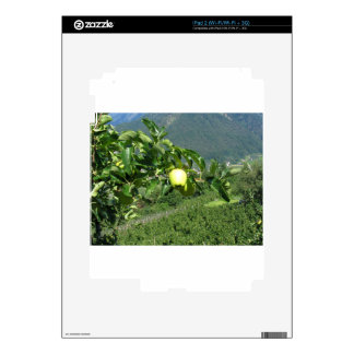 Yellow apples on tree branches decals for the iPad 2