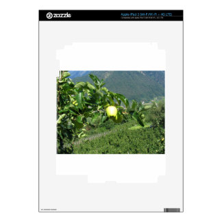 Yellow apples on tree branches decals for iPad 3