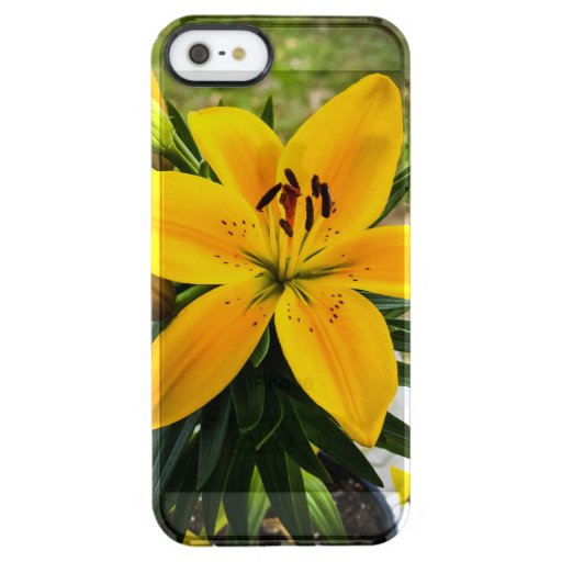 Yellow Asiatic Lily in Bloom Clear iPhone SE/5/5s Case