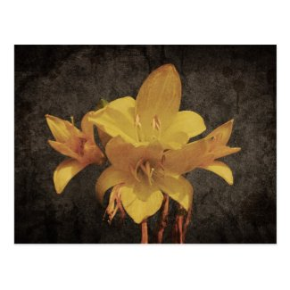 Yellow Asiatic lily on old grunged canvas backgrou Postcard