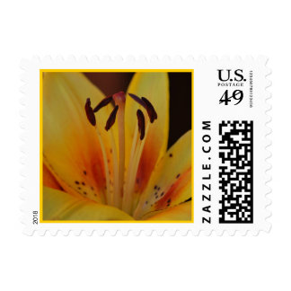 Yellow Asiatic Lily Postage
