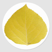Yellow Aspen Leaf #5 Classic Round Sticker