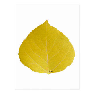 Yellow Aspen Leaf #5 Postcard