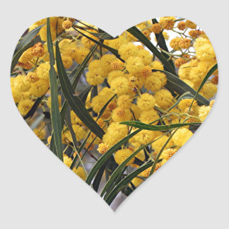 Yellow Australian wattle tree blossoms Heart Sticker