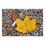 Yellow autumn leaf photo