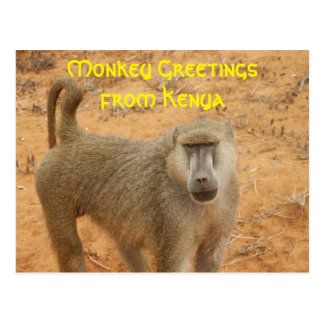 Yellow Baboon Postcard