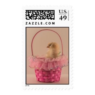 Yellow Baby Chick in Pretty Pink Basket Stamps