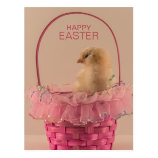 Yellow Baby Chick in Pretty Pink Basket Postcard