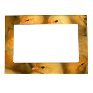 Yellow Baby Chicks Magnetic Frame