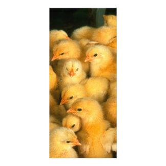 Yellow Baby Chicks Rack Card Template