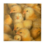 Yellow Baby Chicks Small Square Tile