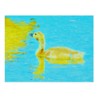 Yellow Baby goose with light blue water Postcard