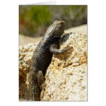 Yellow-Backed Spiny Lizard at Joshua Tree Card