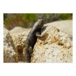 Yellow-Backed Spiny Lizard at Joshua Tree Poster