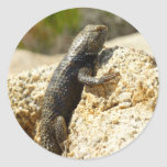 Yellow-Backed Spiny Lizard Classic Round Sticker