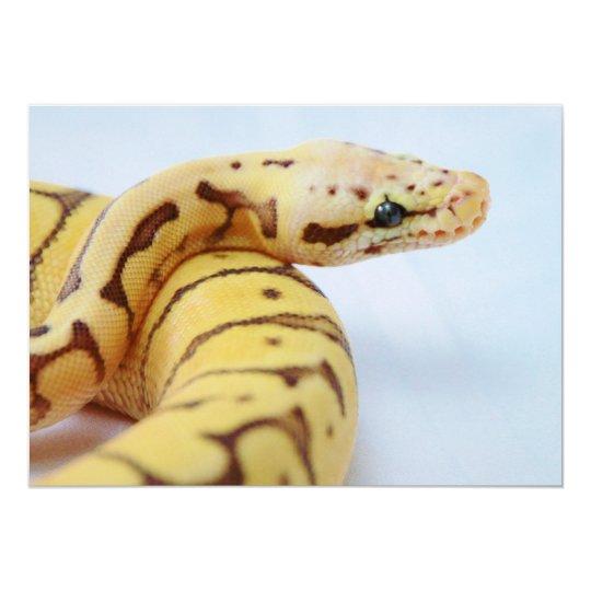Yellow Ball Python Close Up Card