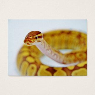 Yellow Ball Python Head Business Card