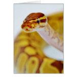 Yellow Ball Python Head Card