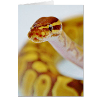 Yellow Ball Python Head Card