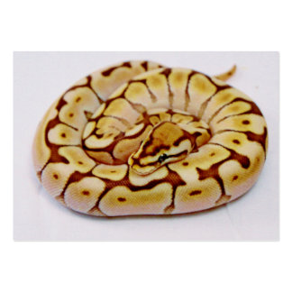 Yellow Ball Python Really Close Up Business Cards