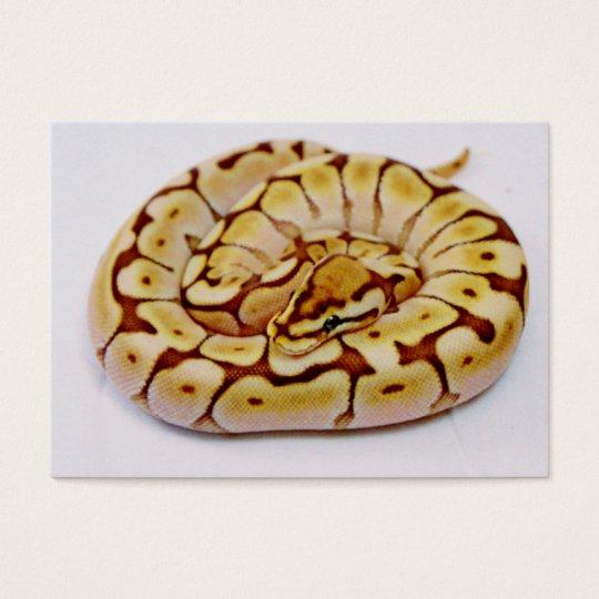 Yellow Ball Python Really Close Up Business Card