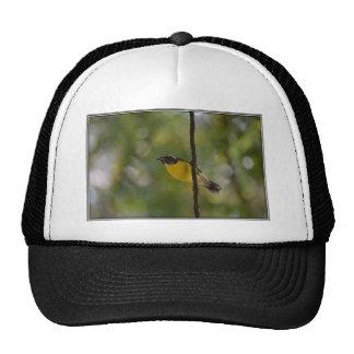 Yellow Bananaquit Bird Trucker Hat