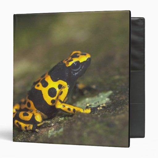 Yellow-banded Poison Dart Frog Dendrobates Vinyl Binder