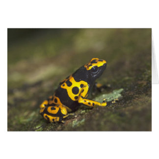 Yellow-banded Poison Dart Frog Dendrobates Greeting Card