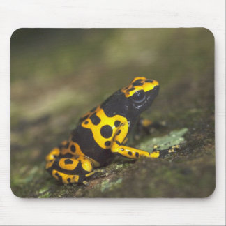 Yellow-banded Poison Dart Frog Dendrobates Mouse Pad