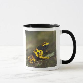 Yellow-banded Poison Dart Frog Dendrobates Mug