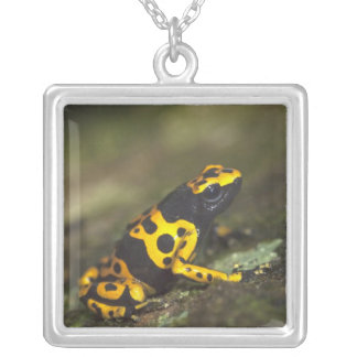 Yellow-banded Poison Dart Frog Dendrobates Square Pendant Necklace