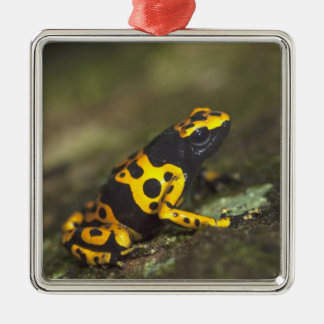 Yellow-banded Poison Dart Frog Dendrobates Square Metal Christmas Ornament