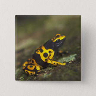 Yellow-banded Poison Dart Frog Dendrobates Pinback Button