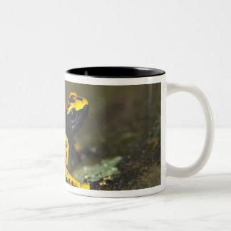 Yellow-banded Poison Dart Frog Dendrobates Two-Tone Coffee Mug