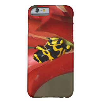 Yellow-banded poison frog barely there iPhone 6 case
