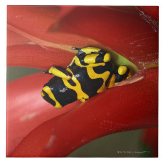 Yellow-banded poison frog ceramic tile
