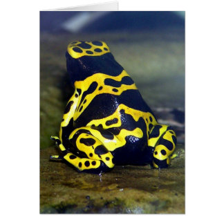 Yellow-banded Poison Frog - Dendrobate leucomelas Greeting Card