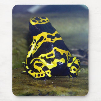 Yellow-banded Poison Frog - Dendrobate leucomelas Mouse Pad