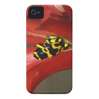 Yellow-banded poison frog iPhone 4 case