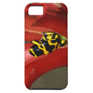 Yellow-banded poison frog iPhone SE/5/5s case