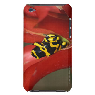 Yellow-banded poison frog iPod Case-Mate case