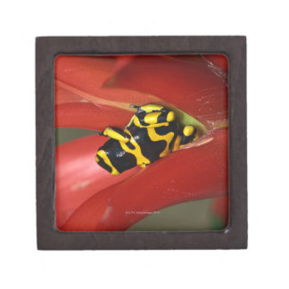 Yellow-banded poison frog jewelry box
