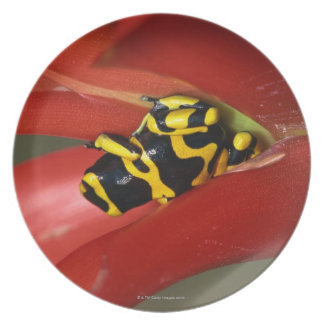 Yellow-banded poison frog melamine plate