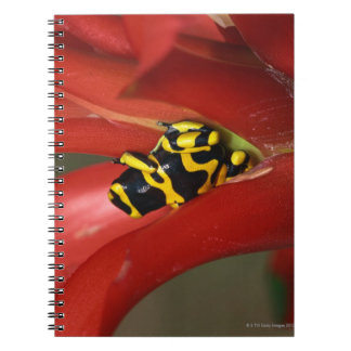 Yellow-banded poison frog spiral notebook