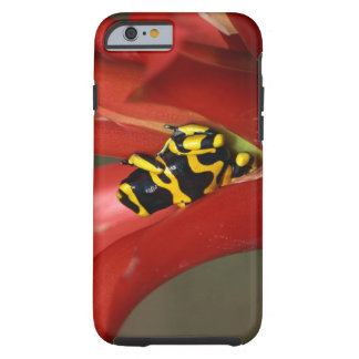 Yellow-banded poison frog tough iPhone 6 case