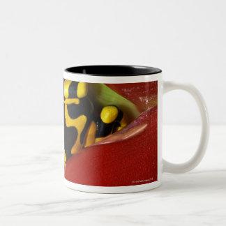 Yellow-banded poison frog Two-Tone coffee mug