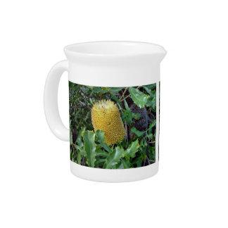 Yellow banksia flower pitchers