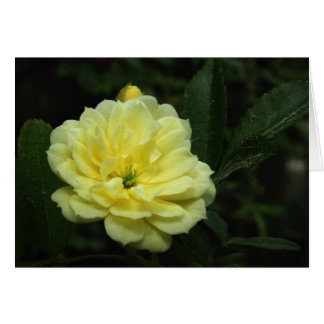 Yellow Banksia Rose Note Card