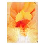 yellow Bearded beauty flowers Post Card